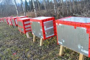 Les ruches sont protégées pour l'hiver. Un léger bourdonnement s'entend lorsque l'on approche l'oreille d'une de ses ruches. En plein hiver, même si c'est -40 degrés, à l'intérieur il fera aux alentours de 30 degrés. (Photo: Jean-Luc Doumont)