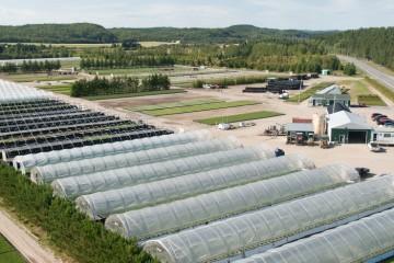 (Courtoisie : Pépinière Boucher Division Plants forestiers)
