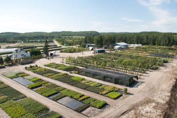 Le Ministère de la Forêt, de la Faune et des Parcs vient de renouveler son contrat de production d'arbres destinés au reboisement. (Photo : courtoisie)